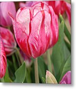 Red And Pink Tulips Metal Print