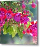 Red And Purple Fuchsias Metal Print
