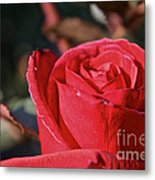 Red And Ready For Review Metal Print