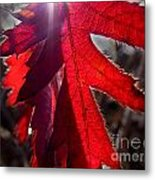 Red And Shadows Metal Print