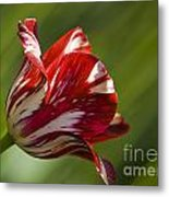 Red And White   Rouge Et Blanc Metal Print