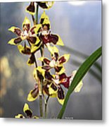 Red And White Orchid  Metal Print