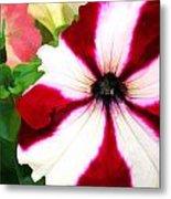 Red And White Petunia Metal Print