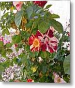 Red And White Roses 3 Metal Print