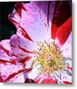 Red And White Speckled Flower Metal Print