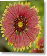 Red And Yellow Metal Print