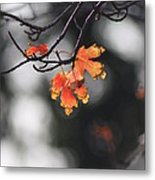 Red And Yellow Fall Leave's Closeup Metal Print