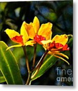 Red And Yellow Orchid Metal Print