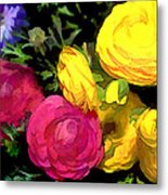 Red And Yellow Ranunculus Flowers Metal Print