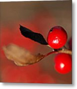 Red As A Winterberry Metal Print