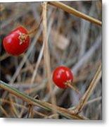 Red Asparagus Berries Metal Print
