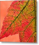 Red Autumn Metal Print by Carol Leigh