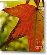 Red Autumn Leaf Metal Print
