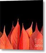 Red Autumn Leaves On Edge Metal Print