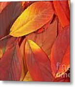 Red Autumn Leaves Pile Metal Print