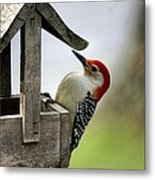 Red Bellied Woodpecker Metal Print by L Granville Laird