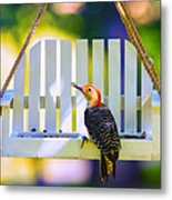 Red-belly Comes For Lunch Metal Print