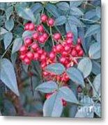Red Berries 1 Metal Print
