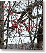 Red Berries White Sky Metal Print