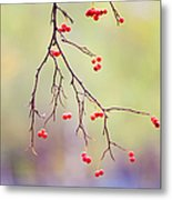Red Berrries Metal Print