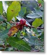Red Berry  Metal Print