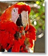 Red Bird Metal Print
