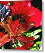 Red Bougainvillea Metal Print