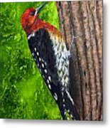 Red Breasted Sapsucker Metal Print