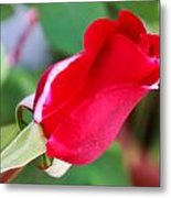 Red Bud Metal Print