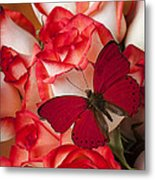 Red Butterfly On Blush Roses Metal Print