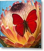 Red Butterfly On Protea Metal Print