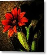 Red Coneflower Metal Print