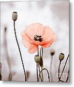 Red Corn Poppy Flowers 01 Metal Print