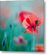 Red Corn Poppy Flowers 04 Metal Print