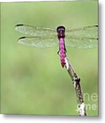 Red Dragonfly Dancer Metal Print