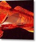 Red Drum Fish  Metal Print by Douglas Snider