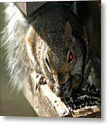Red Eyed Demon Squirrel Metal Print