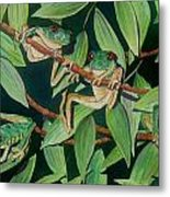 Red Eyed Tree Frogs IIi Metal Print