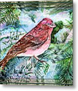 Red Finch Metal Print by Mindy Newman