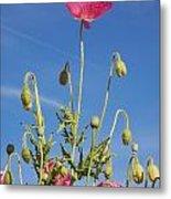 Red Flower Against Blue Sky Metal Print