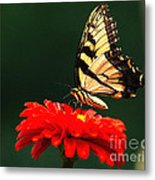 Red Flower And Butterfly Metal Print