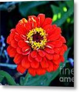 Red Flower  Metal Print