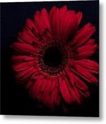 Red Flower Metal Print by Ron Smith
