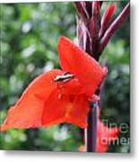 Red Flower With Bug Metal Print