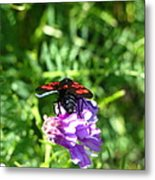 Red Fly Metal Print