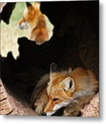 Red Fox Dreaming Metal Print