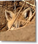 Red Fox Pup Peaking Out Of Den Metal Print
