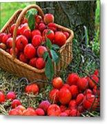 Red Fresh Plums In The Basket Metal Print