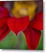 Red Gerber 3 Metal Print