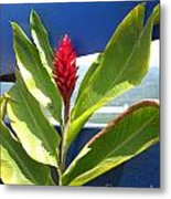 Red Ginger Metal Print
